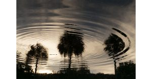 Ripples Through the Palm Tree Sky
