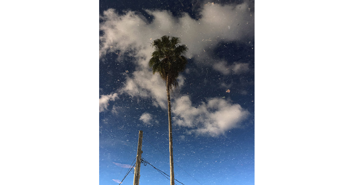 Palm Tree & Pole Beneath Clouds & Blue Sky