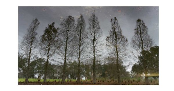Beneath the Mighty Cypress Trees
