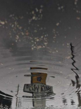 Beefy King Rain Drop