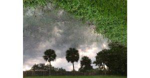 Palms & Grass Sky